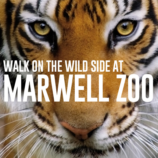 marwell zoo family