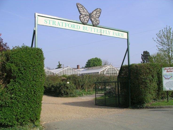 stratford butterfly farm.jpg