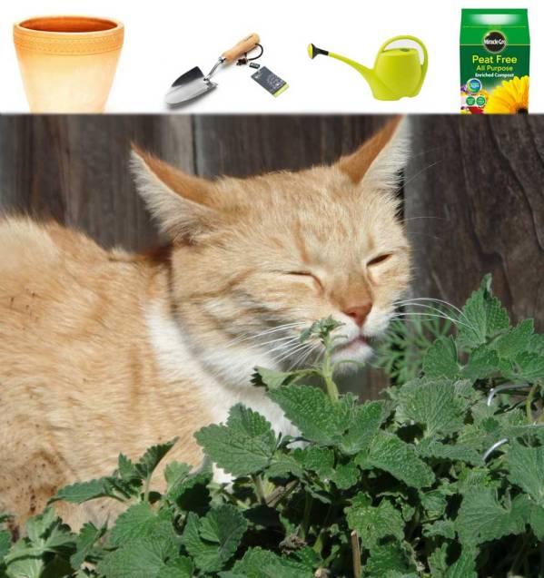 catnip growing kit