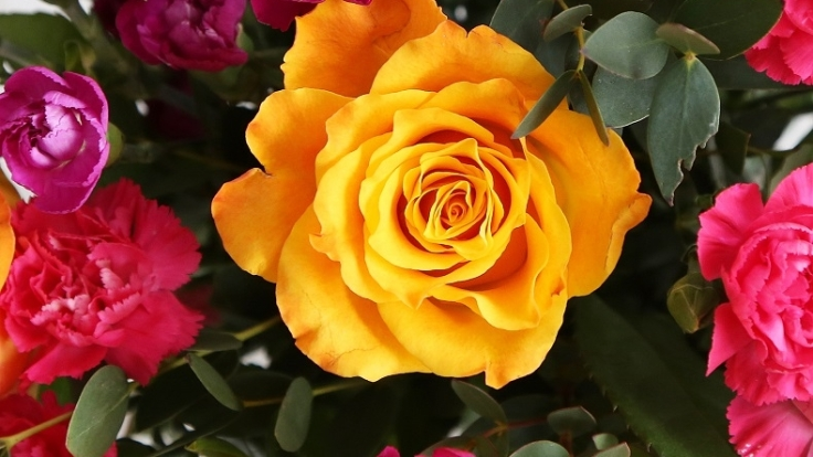 fairtrade flowers