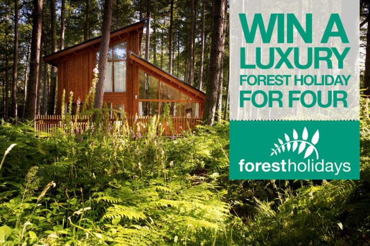 luxury forest holiday for 4