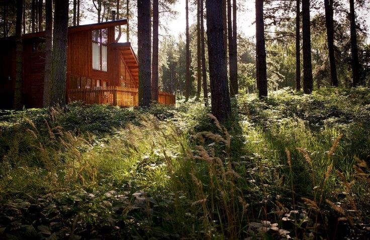 thorpe forest