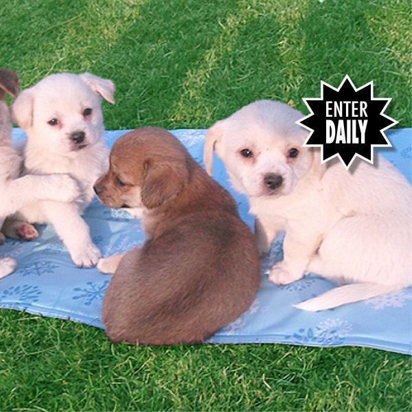 chillr dog cooling mat